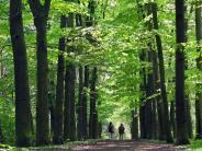 Ausflug ins Grüne: Warum sich der Geist in der Natur erholt