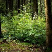 Eine Frau wurde von ihrer Familie als vermisst gemeldet. Nun ist sie im Kssinger Wald gefunden worden.