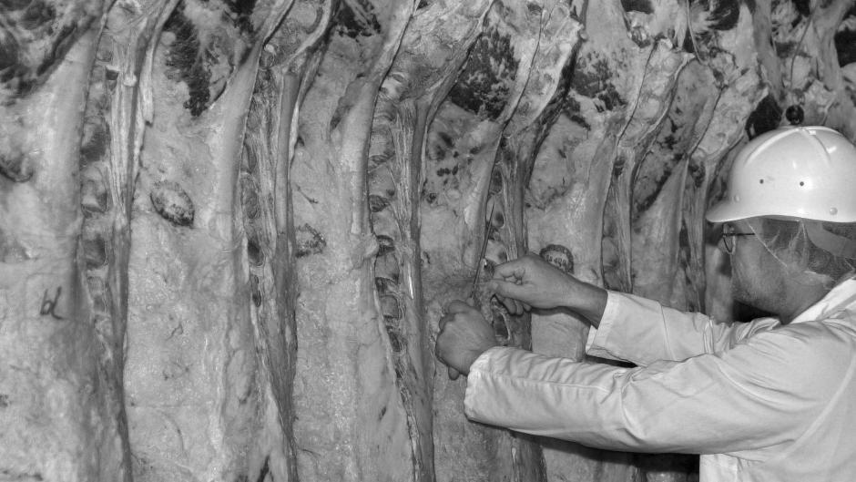Ein Mitarbeiter der Südfleisch GmbH nimmt in Waldkraiburg (Oberbayern) eine Probe von Rinderhälften. Lesen Sie unsere Reportage von 2014.