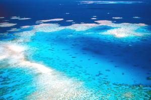 Das größte Korallenriff der Welt leidet unter dem Ausstoß von Treibhausgasen