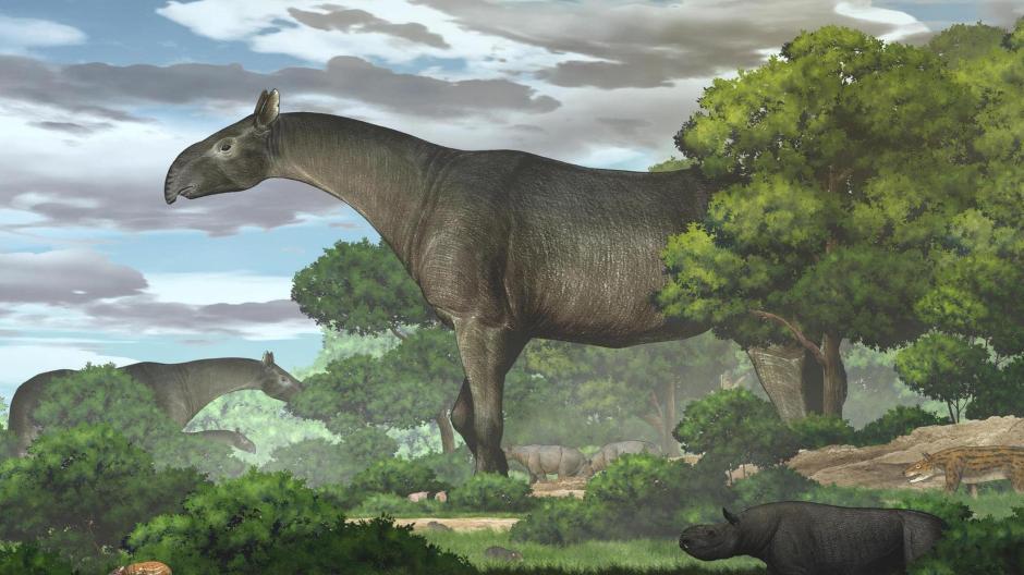 """Der Kopf eher schlank mit einer kurzen rüsselartigen Nase, der Nacken lang: So illustrieren die Forscher das mögliche Aussehen von """"Paraceratherium linxiaense""""."""