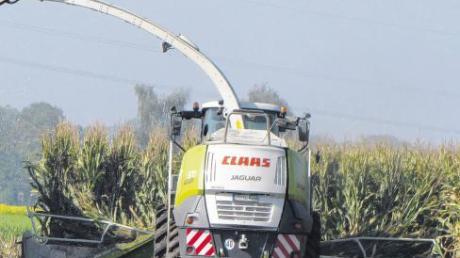 Diese moderne Erntemaschine verschlingt den Mais regelrecht. Zwölf Reihen mäht das Gerät ab, da ist ein Acker im Nu abgeerntet.