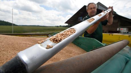 Johann Fröhlich aus Thierhaupten baut Wintergerste, Winterweizen und Hafer an. Am meisten Fläche hat er für den Weizen reserviert. Daraus ergibt sich ein Ertrag von acht bis zehn Tonnen.