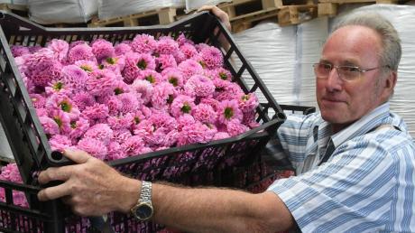 Erleichtert zeigte sich am Freitag Festleiter Franz Rechner: die Dahlienblüten für den Festwagen-Bau sind in guter Qualität eingetroffen.