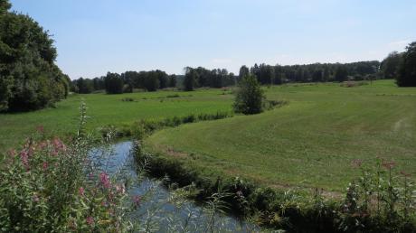 Im Arten- und Biotopschutz-Projekt Ecknachtal versuchen Landwirte und Naturschützer gemeinsam, die gefährdeten Feucht- und Nasswiesen zu erhalten.
