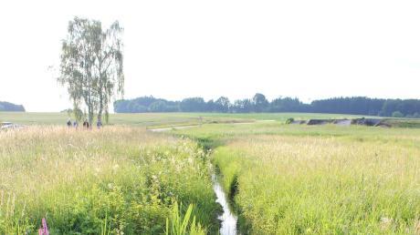 Einer von vielen Gräben zwischen Tödtenried und Sielenbach, an dem sich langsam, aber sicher wieder Blumen und Insekten ansiedeln.