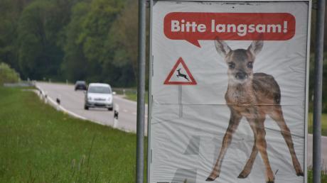 Bambi_3.jpg