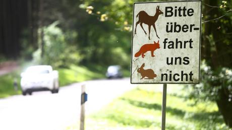 Wildunfälle sind schnell passiert. Am Samstag prallte eine 43-Jährige bei Schrobenhausen mit ihrem Auto in einen Fasan. Dass sie den toten Vogel mitnahm, bereitet ihr nun Scherereien. Symbolbild