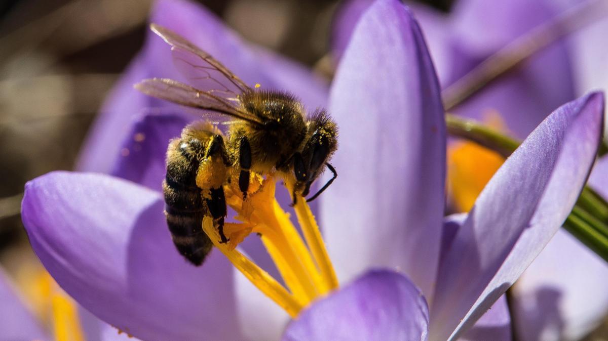 Natur kreisverband f r gartenbau sieht bienen - Gartenbau augsburg ...