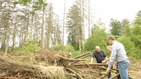 Ortstermin im Lechauwald: (von links) Bürgermeister Konrad Carl, Förster Rolf Banholzer und Ralph Gang begutachten den vom letzten Fällvorgang noch liegen gebliebenen Reisighaufen.