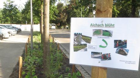 """Bereits angelegt ist die Fläche an der Schulstraße auf Höhe der Tiefgarage. Schilder mit der Aufschrift """"Aichach blüht"""" weisen darauf hin."""