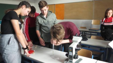 Beim Berufsfindungstag an der Wittelsbacher Realschule in Aichach konnten die Schüler auch praktische Eindrücke von Ausbildungsberufen bekommen.