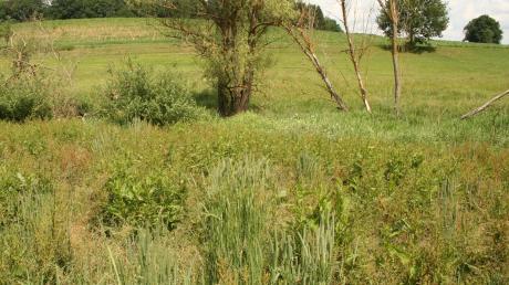 Die Renaturierung des Kabisbachs war im Zusammenhang mit der Aufstellung einer Reiterstatue Thema im Gemeinderat Todtenweis.