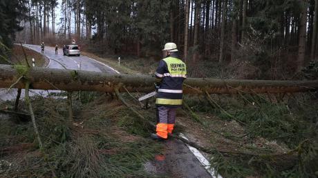 Auch die Freiwillige Feuerwehr Pöttmes war im Einsatz, um Sturmschäden zu beheben. Sie beseitigte umgefallene Bäume nahe den Pöttmeser Ortsteilen Osterzhausen und Kühnhausen.