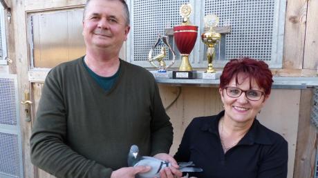 Adam und Maria Wambach sind stolz auf die Auszeichnungen, die ihre Tauben im Jahr 2019 eingeflogen haben: Das Tier mit der Nummer 06455-19-588 erhielt die Auszeichnung als beste Jungtaube 2019; Adam Wambach erhielt zwei Pokale als Jungflugmeister.