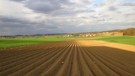 Im Frühjahr werden die Äcker von den Bauern sorgfältig vorbereitet für den Kartoffelanbau. Auf diesem Archivfoto verlaufen die einzelnen Bieflinge auf den Affinger Ortsteil Aulzhausen zu.