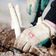 Bei der Lohner AgrarGmbH in Inchenhofen sind 19 weitere Erntehelfer positiv auf Covid-19 getestet worden. Das Unternehmen beendet jetzt freiwillig die Saison. Die würde eigentlich noch drei Wochen laufen.