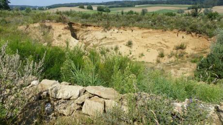 Die ehemalige Sandgrube im Süden von Willprechtszell ist ein beliebter Nistplatz für gefährdete Vögel. Sie finden in Hecken, Büschen und auf Wiesen reichlich Nahrung. Die Steinhäufen dienen Eidechsen zum Sonnen.