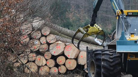 Im Wald bei Aystetten wird viel gefällt. Das ist wichtig für die Holzproduktion, die Westlichen Wälder sollen aber auch Erholungsgebiet sein. Das Foto stammt aus dem Jahr 2017.