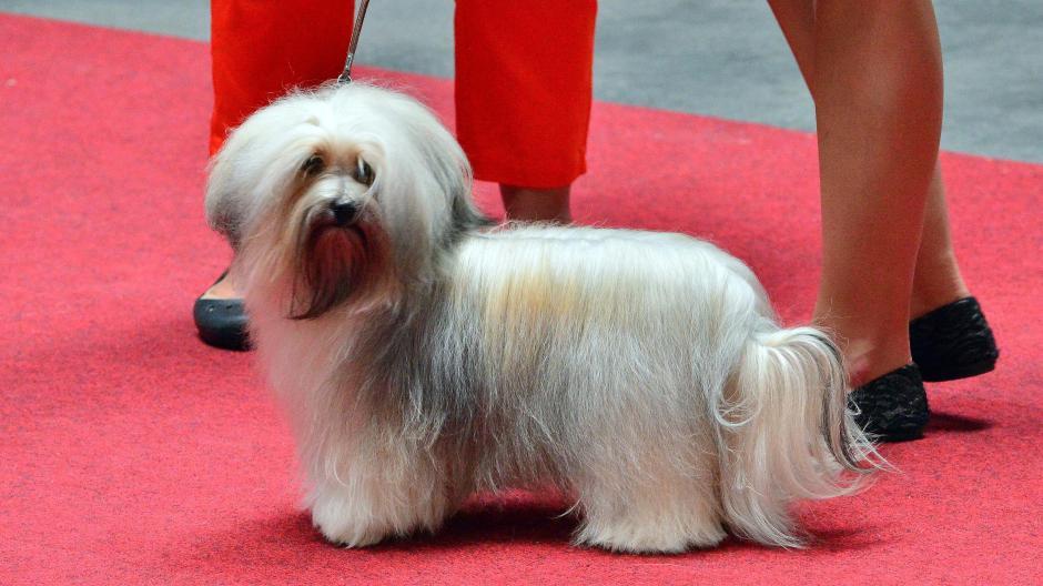 Oberschönenfeld Havaneser Hund Poldi Muss Leider Draußen Bleiben