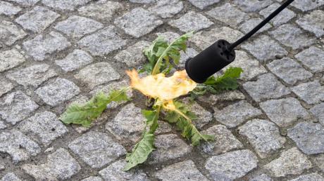 Zur Unkrautbekämpfung werden mittlerweile oft Bunsenbrenner verwendet. Durch das offene Feuer und falsche Handhabung gerieten am Wochenende im Landkreis Augsburg zwei Hecken in Brand.