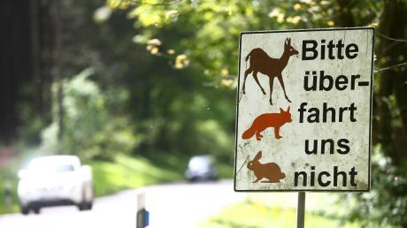 Mit Wildwechsel auf den Straßen in Aichach-Friedberg sollten Autofahrer jederzeit rechnen, teilt die Polizei mit.