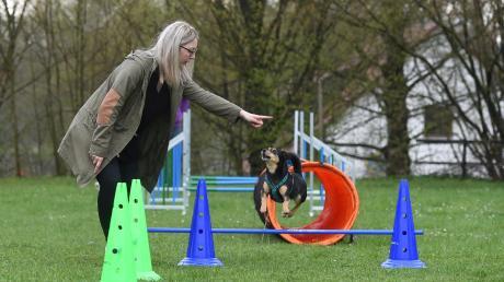 Für einen kleinen Hund macht Emma große Sprünge. Sowohl die Mischlingshündin als auch ihr Frauchen hatten Spaß beim gemeinsamen Sport. Mit Begeisterung wurde über Hürden gesprungen und durch den Tunnel gekrabbelt.