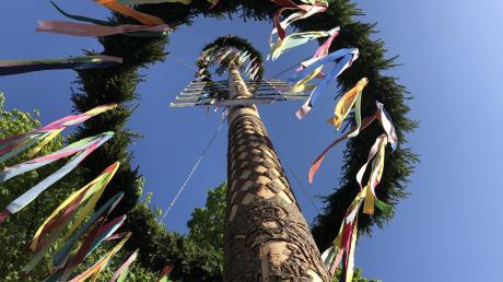 Ein Jubiläumsmaibaum steht in diesem Jahr vor der Wallfahrtskirche St. Michael in Violau.