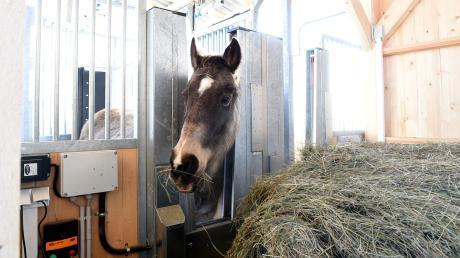 Der Bauausschuss der Marktgemeinde Diedorf hat die Bauanträge rund um die Pferdehaltung an der Lindenstraße auf seiner letzten Sitzung in dieser Sitzungsperiode angenommen.