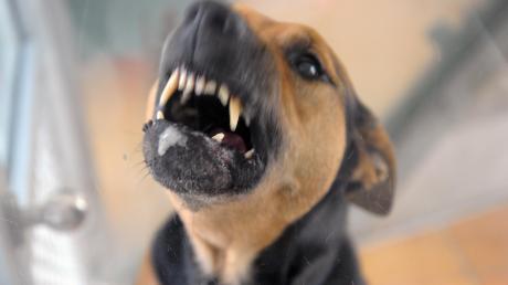 Ein Hund hat in Illerberg einen Postboten angegriffen (Symbolfoto).