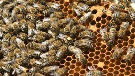 In Langerringenverenden nach einem Anschlag sechs Bienenvölker.