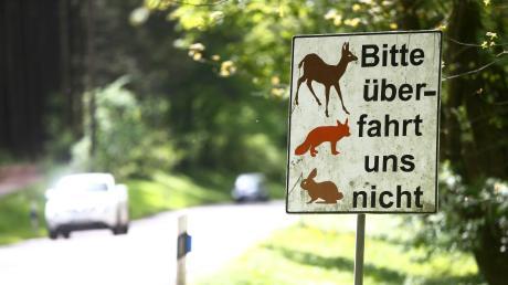 In Friedberg-Ottmaring kollidiert ein 23-Jähriger mit einem Hasen. Das Tier stirbt, das Auto nimmt Schaden.