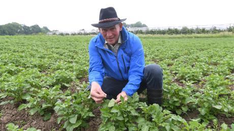 Johann Ellenrieder aus Ustersbach auf seinem Kartoffelfeld. Außerdem baut der Landwirt Roggen und Dinkel an und führt einen Betrieb mit 50 Milchkühen. Seine Tiere ernährt Ellernrieder ausschließlich mit Gras, das von seinem Grünland stammt.