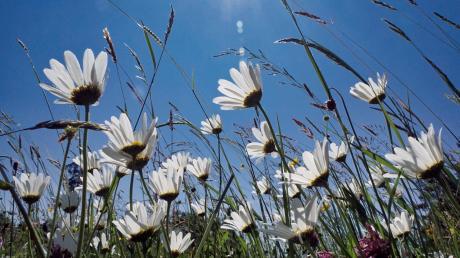 Bonstetten möchte mehr für die Artenvielfalt tun. Dazu sind nun einige Maßnahmen beschlossen worden.
