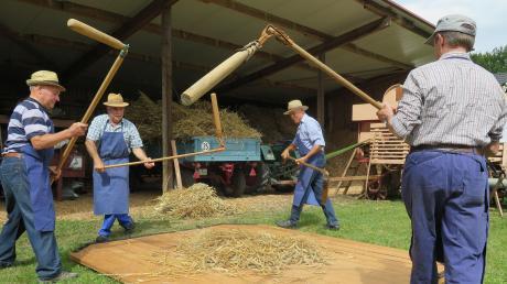 Xaver Wenninger, Rudolf Wenninger, Ulrich Schädle und Martin Koch (von links) schlugen mti den Dreschflegeln gleichmäßig auf die Ähren, um das Korn auszudreschen.