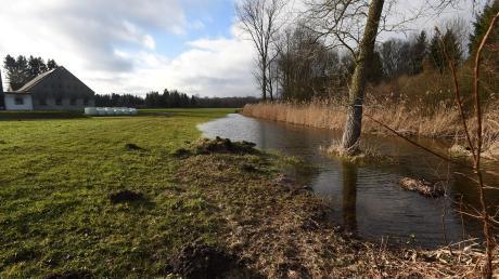 Die Kiesabbaupläne der Nachbargemeinde Münster sollen in unmittelbarer Nähe von Ötz/Altenbach stattfinden. Hier der Bereich am Bayerbach.