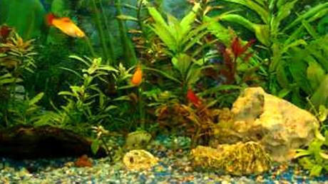 Der Besitzer eines Aquariums hat Lebendgestein in einem Paket verschickt.