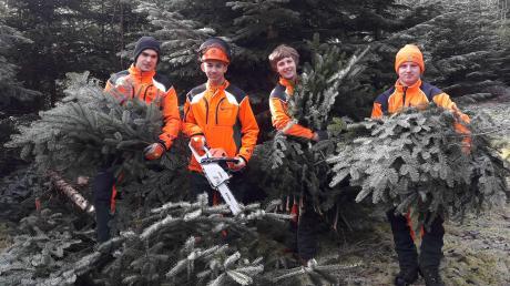 Frisch geschlagene Weihnachtsbäume und Tannengrün bieten die Bayerischen Staatsforsten an den kommenden Adventswochenenden.