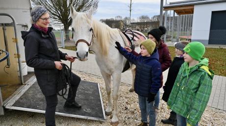"""Fach """"Pferd und Natur"""": Nach dem Ausladen bekommt Radjani von den Realschülern Streicheleinheiten, seine Halterin Martina Katthän hält ihn."""