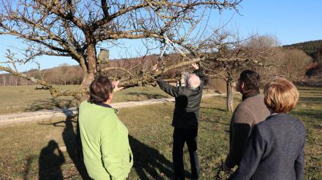 Die Teilnehmer der Gartenstammtische bestimmen selbst, worüber gesprochen wird. Ein mögliches Thema ist der richtige Zuschnitt der Obstbäume.