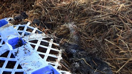 Ein Strohballenlager hat in Nordendorf am Wochenende gleich dreimal gebrannt. Die Ermittler vermuten daher Brandstiftung.