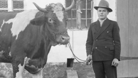 """Ein stattliches Rind führt dieser Mann an der Leine, gekleidet in seinen besten Sonntagsanzug. Dieses historische Foto ist ein Teil der Sonderausstellung """"Zum Fressen gern?"""" im Museum Oberschönenfeld."""