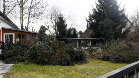 Baumfällungen auf einem Grundstück in Stadtbergen haben das Landratsamt auf den Plan gerufen. Für den Stop der Arbeiten gibt es mehrere Gründe.