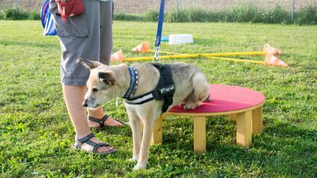 In Horgau wird es keinen Hundetrainingsplatz geben, die Bedenken der Nachbarn sind zu groß.