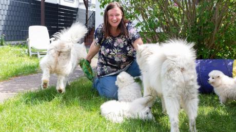 Alice Arloth beschäftigt sich seit zehn Jahren intensiv mit der nordischen Hunderasse der Samojeden. Es war Liebe auf den ersten Blick und aus der einstigen Hundehalterin wurde eine erfahrene Hundezüchterin.