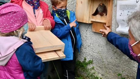 Willi Behringer vom Landesbund für Vogelschutz (rechts) erklärt den Kindern, wie ihr selbst gebastelter Nistkasten für die Fledermausart Braunes Langohr funktioniert. Die Tiere fressen gerne Eichenprozessionsspinner.