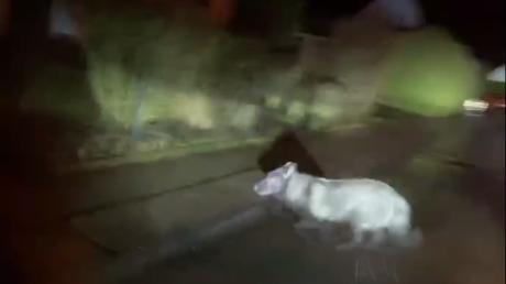 Die Experten vom Landesamt für Umwelt glauben nicht, dass hier ein Wolf zu sehen ist.