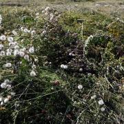 Das blieb nach der Mahd der Wiese östlich der Straße Am Mühlängerle in Gersthofen übrig. Die Lechwerke schnitten die Pflanzen in Absprache mit der Naturschutzbehörde ab.