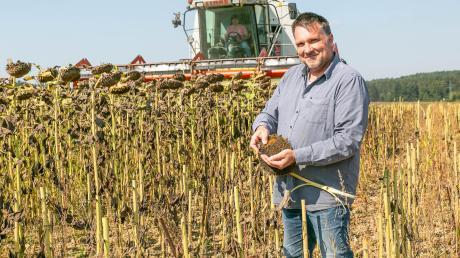 Marcus Hartmann ist zufrieden mit seinen Sonnenblumen. Er betreibt eine große Ölmühle in Biburg.