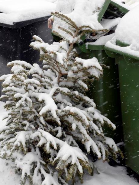 Bis Wann Bleibt Der Weihnachtsbaum Stehen.Augsburg Wie Lange Soll Der Christbaum Bleiben Lokales Augsburg